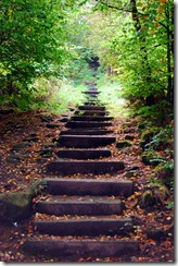 Photo: Steps in the Woods by Time Green